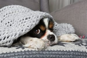 dog-under-blanket-cold-home